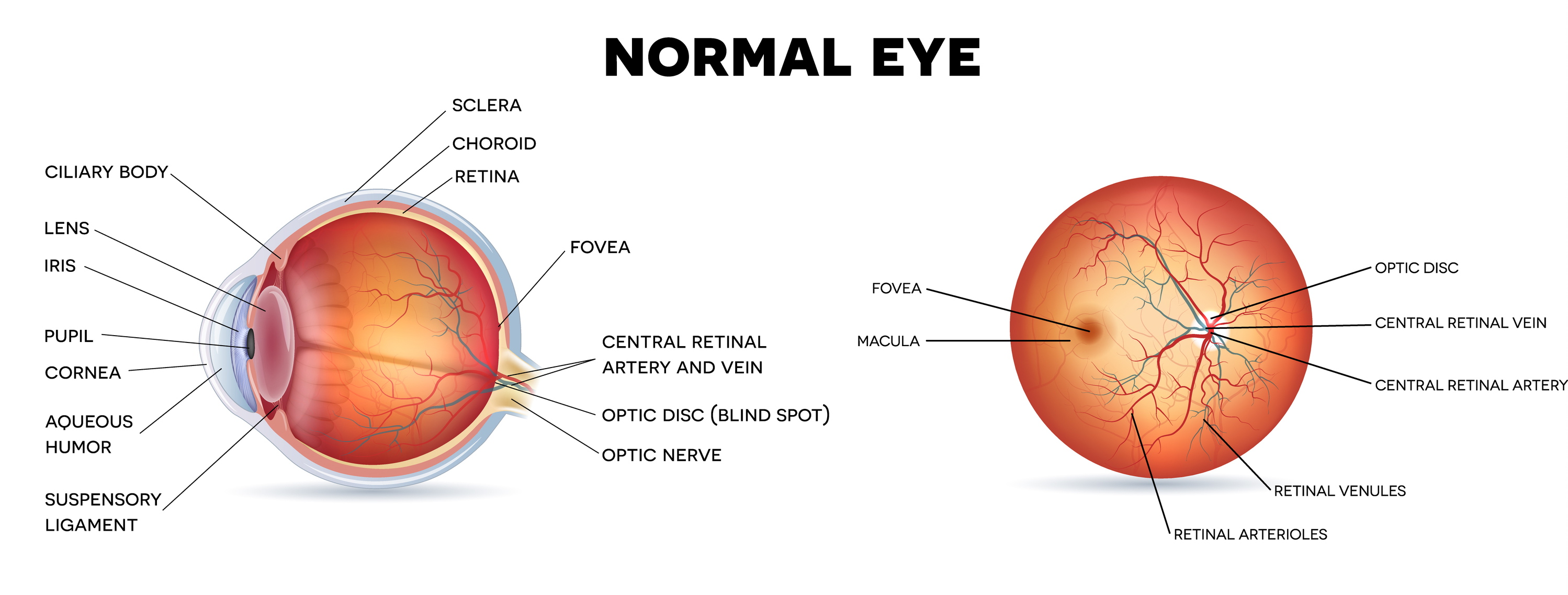 Why do doctors dilate my eyes a retinal pictures worth a thousand a chart explaining diabetic retinopathy visible with a comprehensive eye exam geenschuldenfo Choice Image